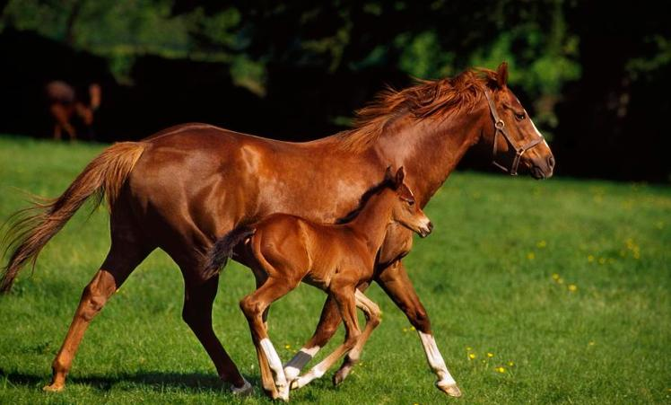 mare-and-foal-1