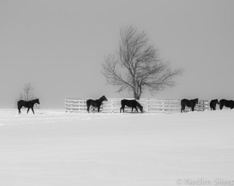 ralph-mares-and-foals-in-the-snow